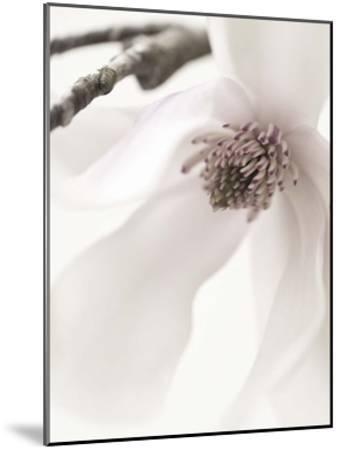 Magnolia Blush I-Christine Zalewski-Mounted Art Print