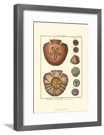 Sand Dollars IV-Diderot-Framed Art Print