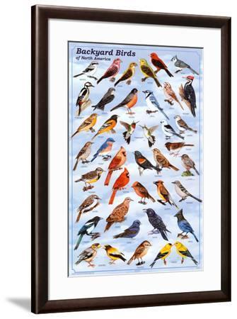 Backyard Birds Educational Science Chart Poster--Framed Poster