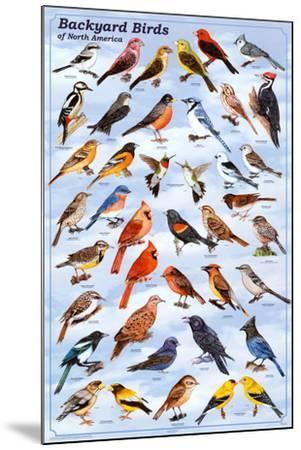 Backyard Birds Educational Science Chart Poster--Mounted Poster
