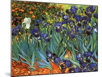 Irises, Saint-Remy, c.1889-Vincent van Gogh-Mounted Art Print