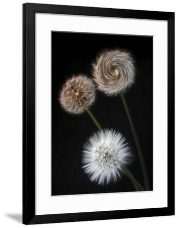 Metamorphose-Ilona Wellmann-Framed Art Print