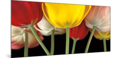 Sunshine Tulips-Assaf Frank-Mounted Art Print