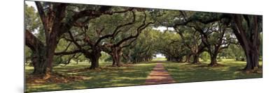 Enchanted Oaks-Mike Jones-Mounted Art Print