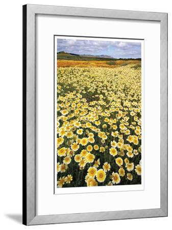 Sea of Flowers I-Donald Paulson-Framed Giclee Print