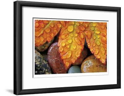 Maple and Dew I-Donald Paulson-Framed Giclee Print