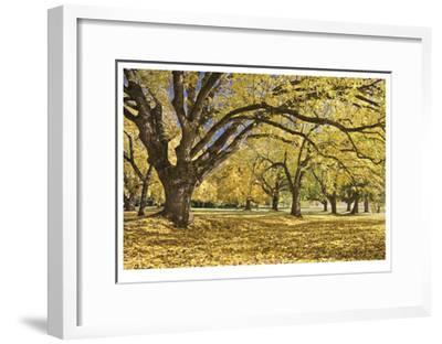 Stewart Park Walnut Trees I-Donald Paulson-Framed Giclee Print