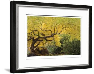 Lithia Park Arching Maple-Donald Paulson-Framed Giclee Print