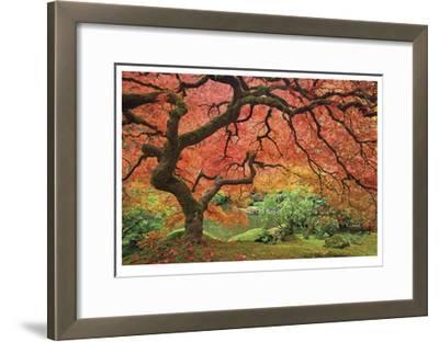 Japanese Maple Tree-Donald Paulson-Framed Giclee Print