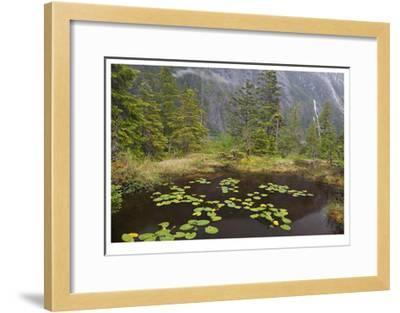 Endicot Arm Lillies-Donald Paulson-Framed Giclee Print
