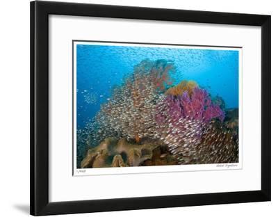 Soft Corals and Glassfish-Jones-Shimlock-Framed Giclee Print