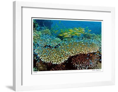 Table Coral and Reef Fish-Jones-Shimlock-Framed Giclee Print