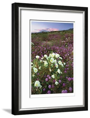 Anza Flower Meadow II-Donald Paulson-Framed Giclee Print