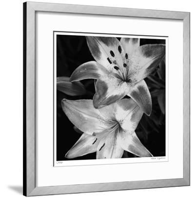 Botanical Study 5-Stacy Bass-Framed Giclee Print