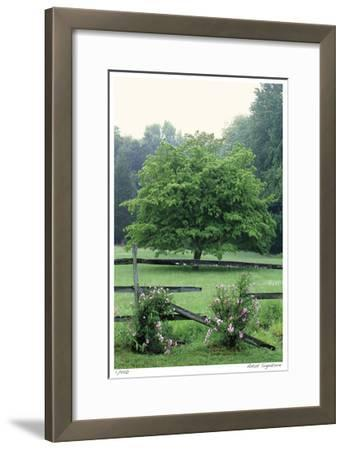 Tree Fence Roses-Stacy Bass-Framed Giclee Print