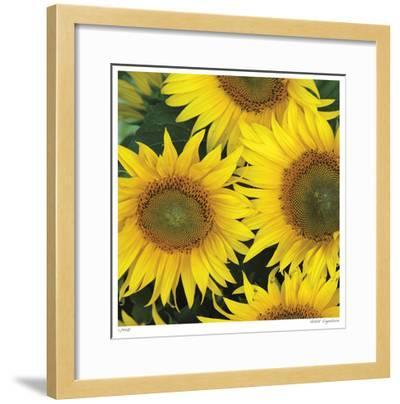 Sunflower Square-Stacy Bass-Framed Giclee Print