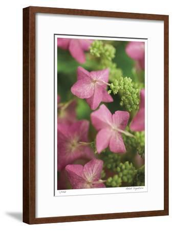 Antique Rose-Stacy Bass-Framed Giclee Print