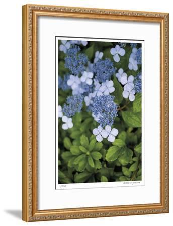 Hydrangea Variation-Stacy Bass-Framed Giclee Print