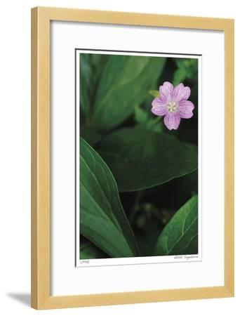 Pink Love 1-Stacy Bass-Framed Giclee Print