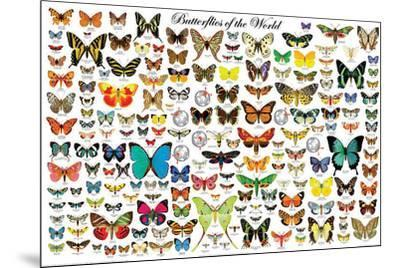 Butterflies of the World--Mounted Poster