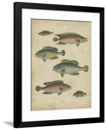 Ichthyology I-Abraham Rees-Framed Art Print