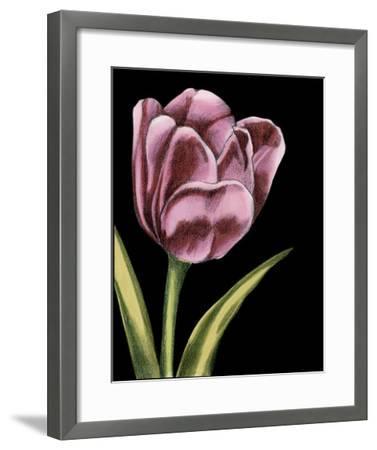 Vibrant Tulips III-Ethan Harper-Framed Giclee Print