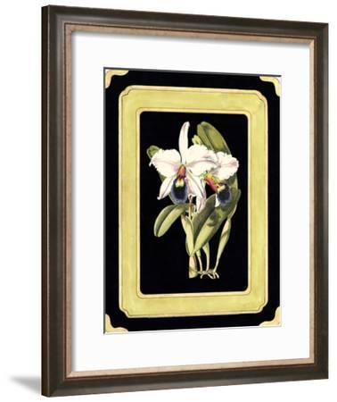 Orchids on Black I-J^ Nugent Fitch-Framed Giclee Print