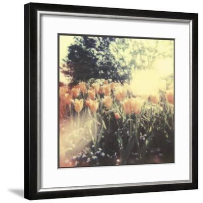 Tulipa Exposta II-Jason Johnson-Framed Giclee Print