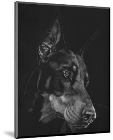 Canine Scratchboard III-Julie Chapman-Mounted Art Print
