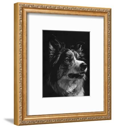 Canine Scratchboard IV-Julie Chapman-Framed Art Print