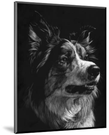 Canine Scratchboard IV-Julie Chapman-Mounted Art Print