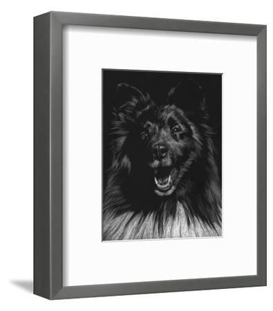 Canine Scratchboard IX-Julie Chapman-Framed Art Print
