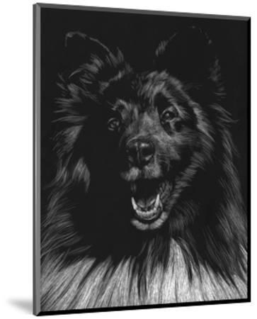 Canine Scratchboard IX-Julie Chapman-Mounted Art Print