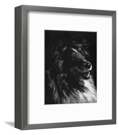 Canine Scratchboard XI-Julie Chapman-Framed Art Print