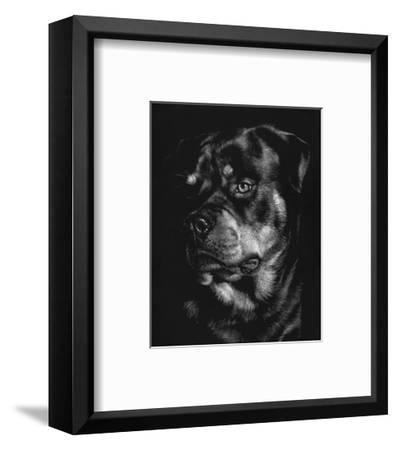 Canine Scratchboard XII-Julie Chapman-Framed Art Print