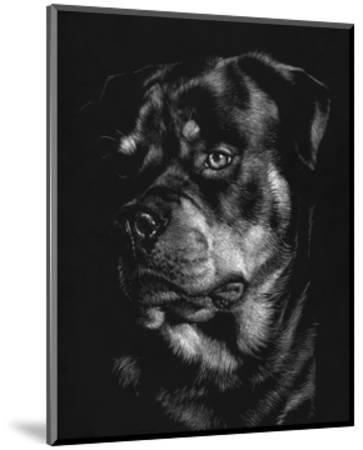 Canine Scratchboard XII-Julie Chapman-Mounted Art Print