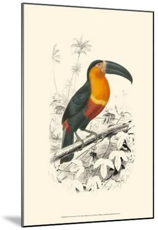 Birds of Costa Rica I-M^ Charles D'Orbigny-Mounted Art Print