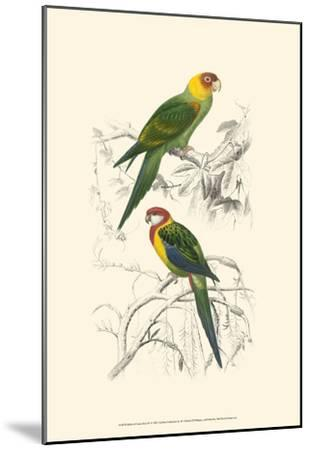 Birds of Costa Rica IV-M^ Charles D'Orbigny-Mounted Art Print