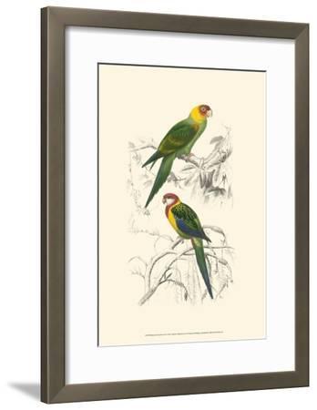 Birds of Costa Rica IV-M^ Charles D'Orbigny-Framed Art Print
