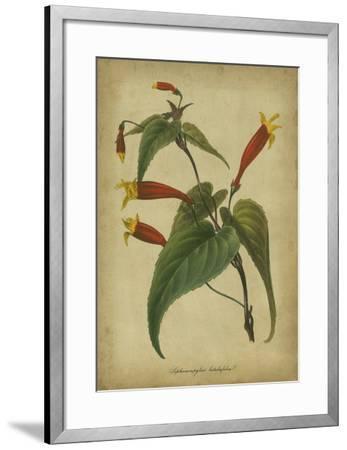 Vermilion Blooms IV-Paxton-Framed Art Print