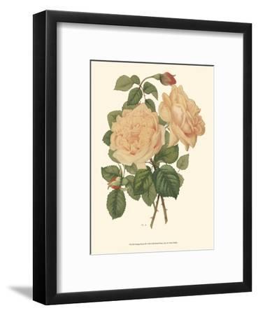 Vintage Roses III--Framed Art Print