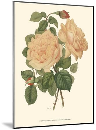 Vintage Roses III--Mounted Art Print