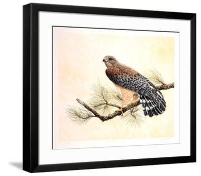 Red Shouldered Hawk-Chris Forrest-Framed Limited Edition