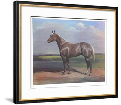 Quarterhorse-Helen Hayse-Framed Collectable Print