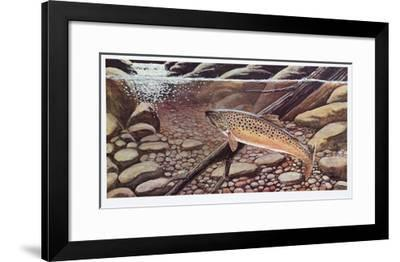 Big Brown Caught In The Open-Allen Friedman-Framed Limited Edition