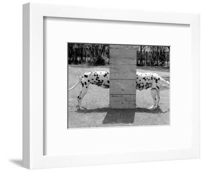 Spotty Love--Framed Art Print