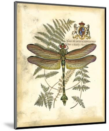 Regal Dragonfly III--Mounted Giclee Print