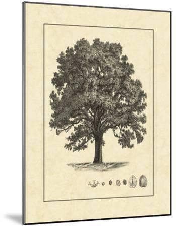Vintage Tree I--Mounted Giclee Print