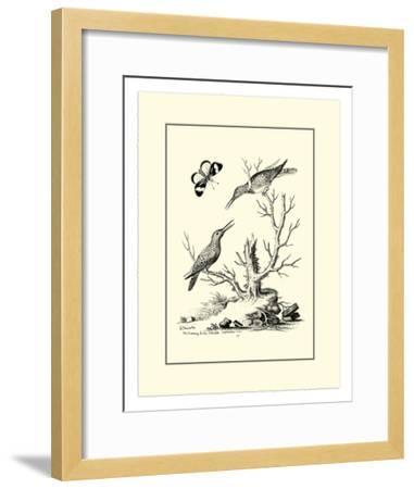 The Hummingbirds, c.1742-George Edwards-Framed Giclee Print