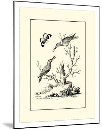 The Hummingbirds, c.1742-George Edwards-Mounted Giclee Print